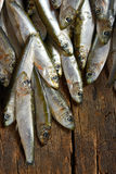Heap of small anchovies Stock Image