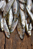 Heap of small anchovies Stock Images