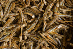 Heap of Small Dry Fish Stock Image