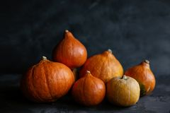Heap of small orange pumpkins family. Thanksgiving. royalty free stock photo