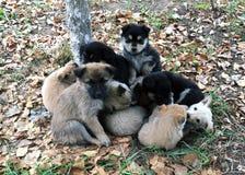 Heap of small puppies on autumn foliage Royalty Free Stock Photo