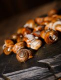 Heap of snail shells on black stone with detail of one Stock Images