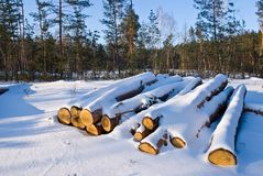 Heap of snowbound logs Royalty Free Stock Photos