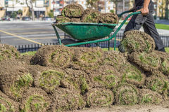 Heap of sod rolls for installing new lawn Stock Image