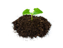 Heap soil with a green plant sprout Royalty Free Stock Image