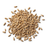 Heap of Spelt wheat. Heap of raw Spelt wheat on white background stock images