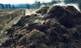 Heap of steaming cow-dung Stock Photos