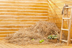 Heap of straw in a board corner. Heap of straw in an interior of a photographic studio Royalty Free Stock Photo