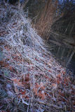 Heap straw, dried leaves and plants covered with white frost Stock Photo