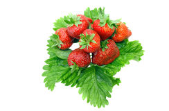 A heap of strawberries on green foliage. Isolated Royalty Free Stock Photos