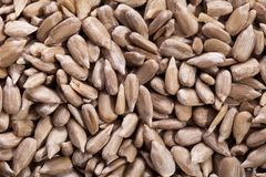 Heap of sunflower seed close up Royalty Free Stock Photography