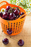 Heap of sweet cherries in basket. Heap of sweet cherries in orange basket on wooden background Royalty Free Stock Images