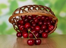 Heap of sweet cherries which dropped out from. Heap of sweet cherries which dropped out of a basket, on a table Stock Image