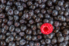 Heap of sweet fresh blueberries with one raspberry Stock Photo