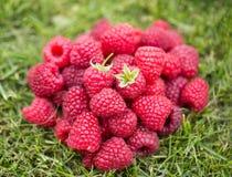 Heap of sweet raspberry Stock Photography