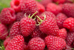 Heap of sweet raspberry Royalty Free Stock Photo