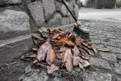 A heap of swept leaves royalty free stock image