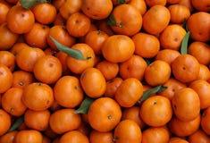 Heap of tangerines Royalty Free Stock Photos