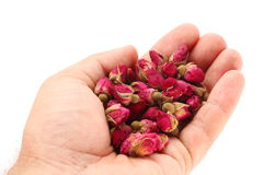 Heap of tea roses in man's hand. Stock Image