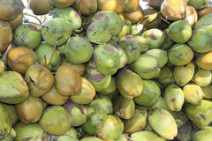 Heap of Tender Coconut Stock Images
