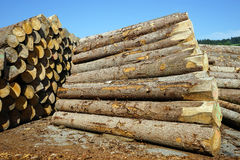 Heap of timber Stock Photography