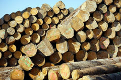 Heap of timber Royalty Free Stock Images