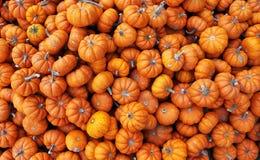 Heap of tiny pumpkins Stock Photography