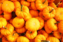 Heap of tiny pumpkins Stock Photos