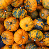 Heap of tiny spotted pumpkins. Stock Images