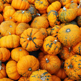 Heap of tiny spotted pumpkins Stock Photo