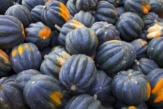 Heap of tiny striped blue pumpkins Stock Photography