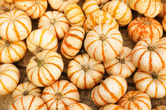 Heap of tiny striped pumpkins. Background Stock Image