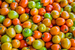 Heap of tomatoe fruits (Lycopersicon esculentum Mill.) Royalty Free Stock Photos