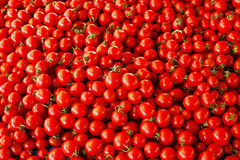 Heap of tomatoes Stock Images
