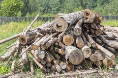 Heap of tree logs Royalty Free Stock Photos