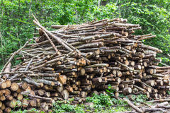 Heap of tree trunks. Felling trees in the forest. Stock Image