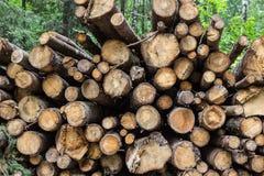 Heap of tree trunks Stock Image