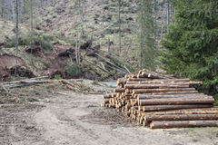 Heap of trees on path in Tatras National Park. Stock Photo