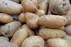 Heap of uncooked light brown potatoes Royalty Free Stock Photos