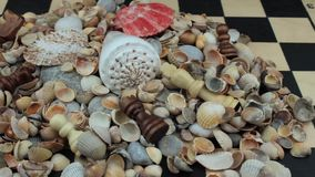 On a chessboard seashells stock footage