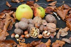 Heap of walnuts and hazelnuts royalty free stock photo