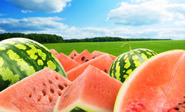 Heap of watermelon Stock Photo