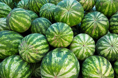 Heap of watermelons. Royalty Free Stock Photo
