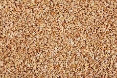 Heap of a wheat grain Stock Photo