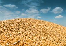 Heap wheat Stock Photos