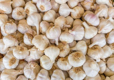 Heap of white garlic bulbs on market Stock Image