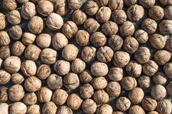 Heap of whole freshly picked walnuts Stock Photo