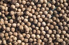 Heap of whole freshly picked walnuts Royalty Free Stock Photo