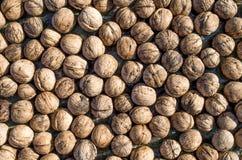 Heap of whole freshly picked walnuts Royalty Free Stock Photos