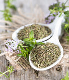 Heap of Winter Savory Royalty Free Stock Image